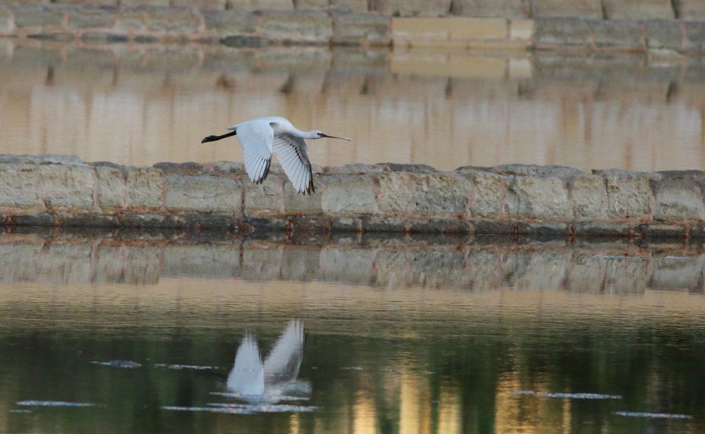 Birdwatching Malta